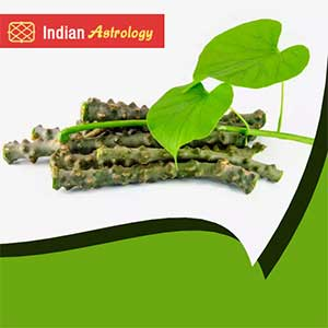 Treatment of Dengue - Miraculous Herb - Giloy