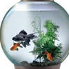 Relevance of Aquarium in Fengshui