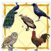 पंच पक्षी का आधार