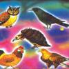 शुक्ल पक्ष: रात्रि में पंच पक्षी के कार्य-3