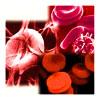 थैलेसीमिया लाल रक्त कोशिकाओं की विकृति
